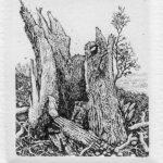 Gerenot Richter: Torso VII (Pappel), Radierung, 1983, 4,5 x 3,5 cm, WV II-180